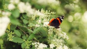 Skovens Dag d. 6. maj på Kongskilde Naturcenter